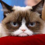 Grumpy Cat je mŕtva